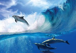Brico+   Fotomural delfines